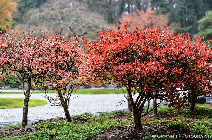 Japanese Gardens- Portland, Or