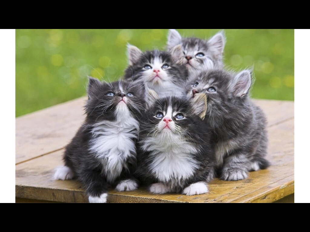 Can you find th cutest pics of kittens ever?
