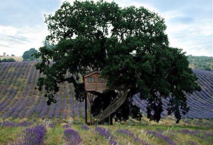 Casa sull albero la piantata agriturismo b b prodotti biologici
