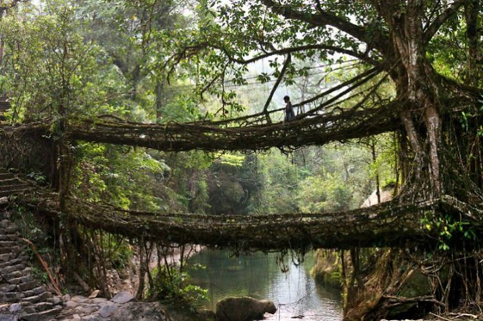 A Tree Which Bridges Gap