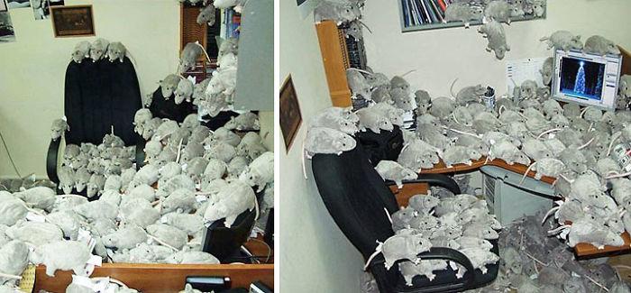 Stuffed Rat Prank