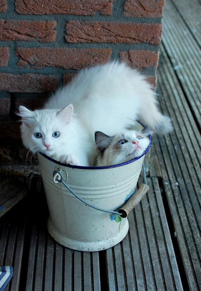 Purrrfect Bucket