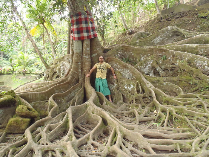 Tree In Holy Gardens Bali