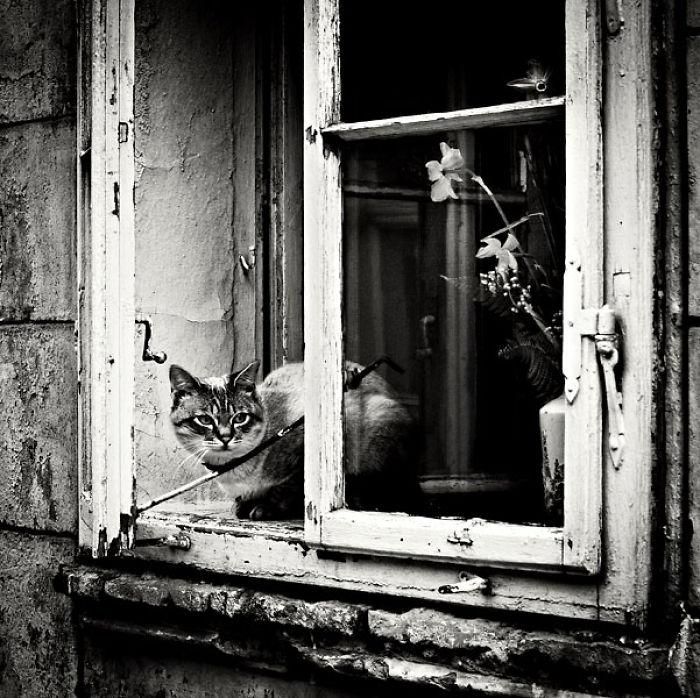 Open Window...