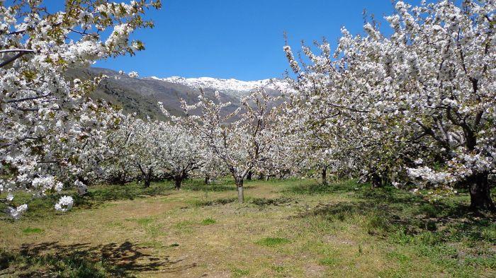 Valle Del Jerte (cáceres, España)