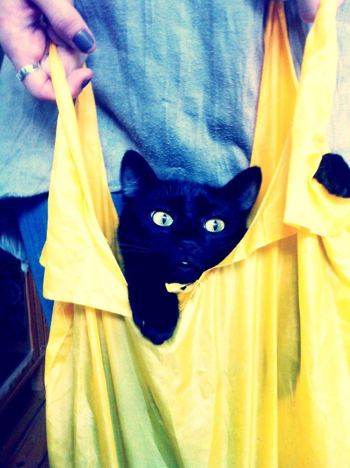 Cat In The Bag :)