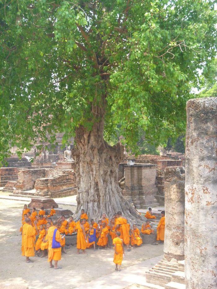 Sukhothai Tree