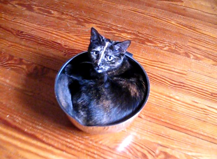 Bowl Kitty