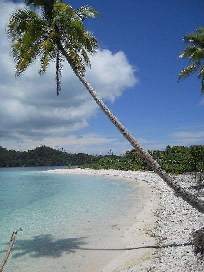 Wallis & Futuna, Cocotier