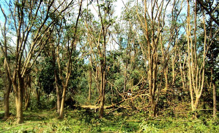 .....atop A Fallen Tree, Uplb Philippines