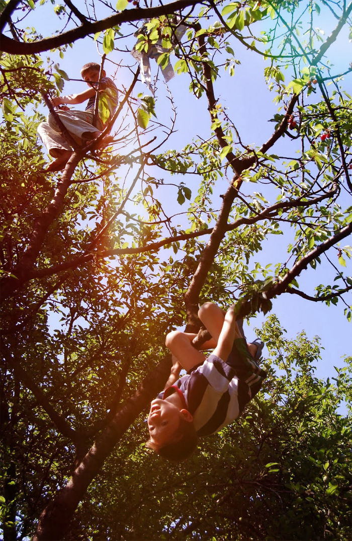 Cherry Picking By Luchit Anca Dumy