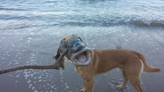 Fish_dog :)