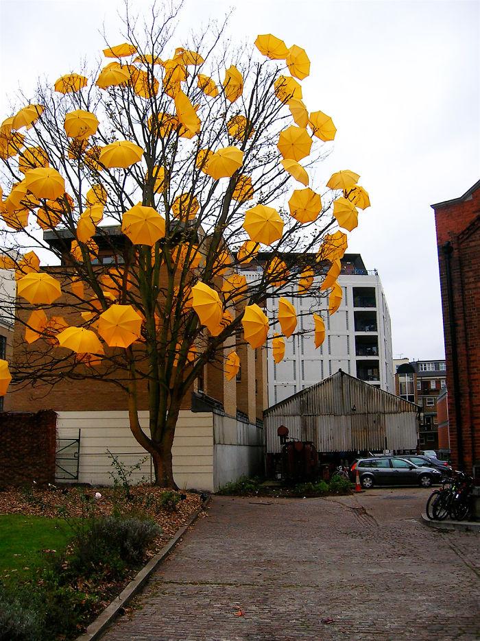 Umbrella Tree By Sam Spencer