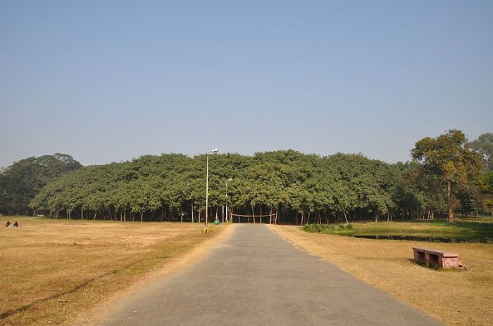 The Great Banyan Tree Is Over 250 Years Old And In Spread It Is The Largest Known In India, Per
