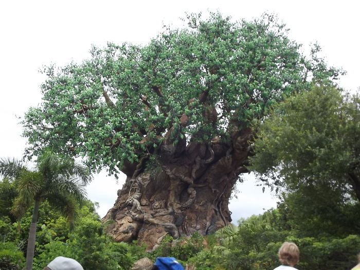 Animal Kingdom Tree Florida