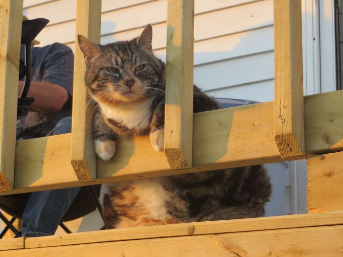 My Cat, The Behemoth That Guards The Bridge.