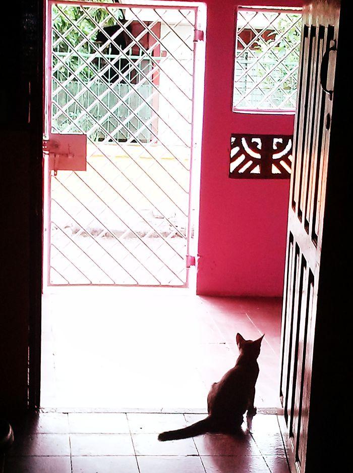 Kurama Sama Waiting For Mommy - Nicaragua