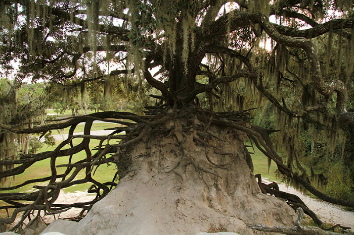 Medard Park, Florida
