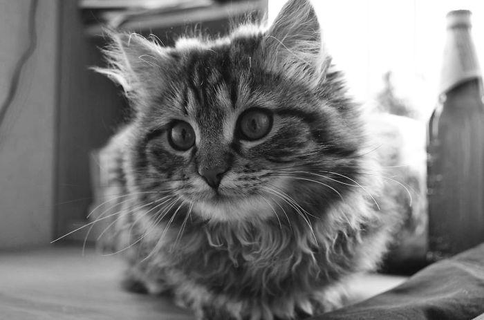 My Classy Kitty Lushia :)