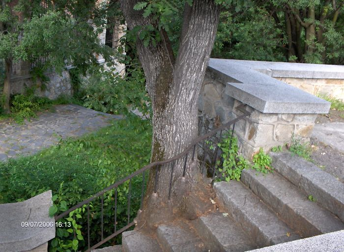 Tree Grown Through Railings