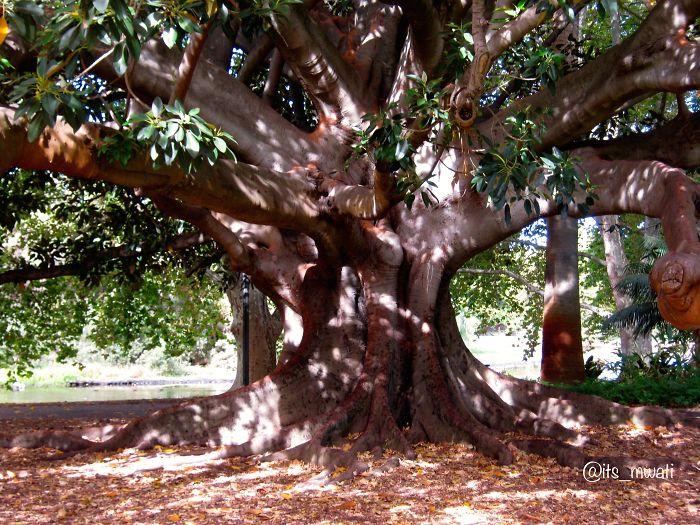 King's Park. Perth, Australia