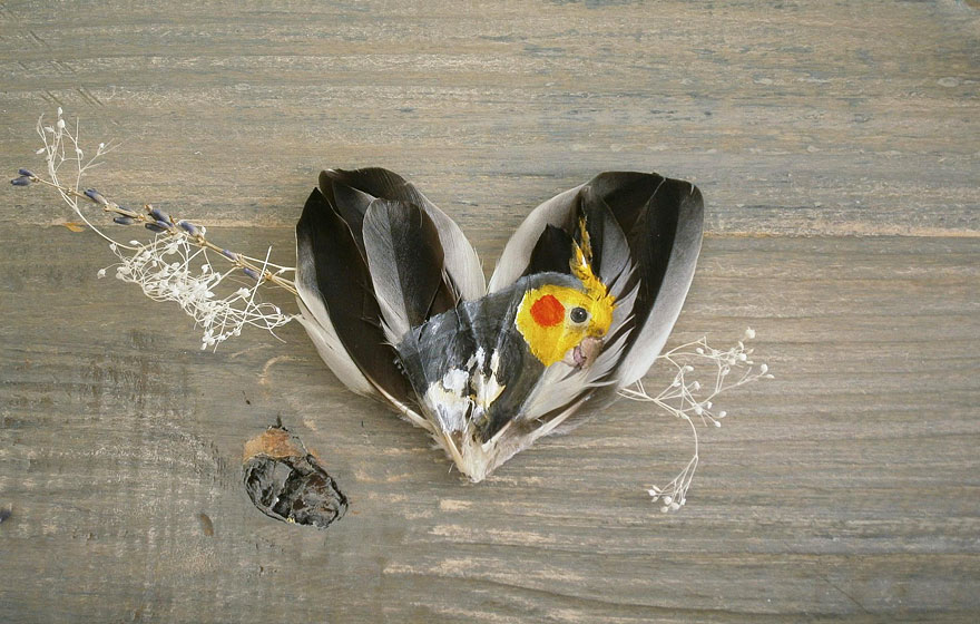 oil-acrylic-paintings-parrot-feathers-jamie-homeister-30