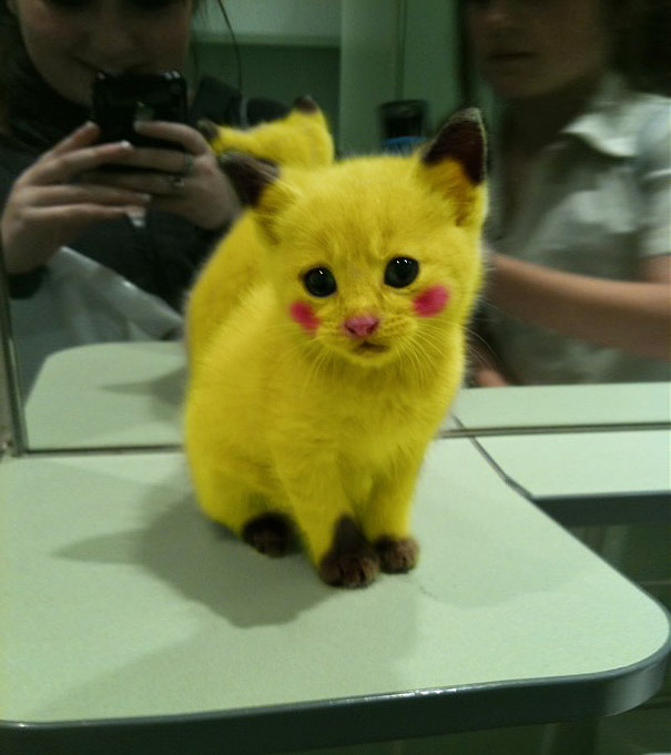 pikachu kitty pic bored panda