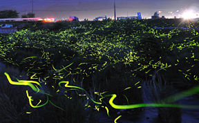 Surreal Long Exposure Photos of Gold Fireflies
