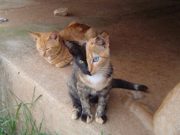 rad cat cat food