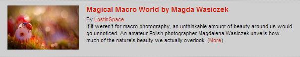Magical Macro World by Magda Wasiczek