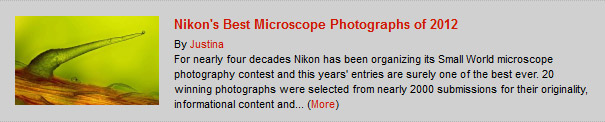 Nikon's Best Microscope Photographs of 2012