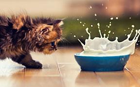Probably the World's Cutest Kitten