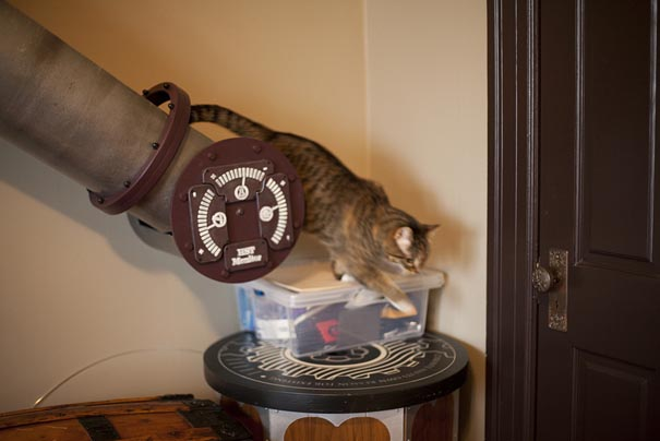Cat Transit System for a Home Office