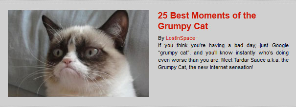 25 Best Moments of the Grumpy Cat