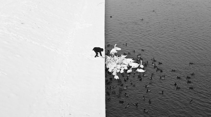 Yin and Yang: Man Feeding Swans and Ducks in Krakow