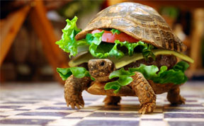 Chinese Man Tries to Smuggle A Turtle Disguised As A Hamburger On A Plane