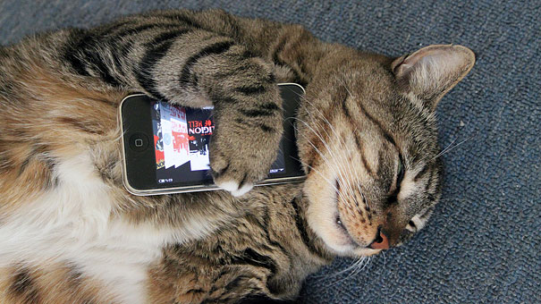 Texts From Mittens: What If Cats Could Text?