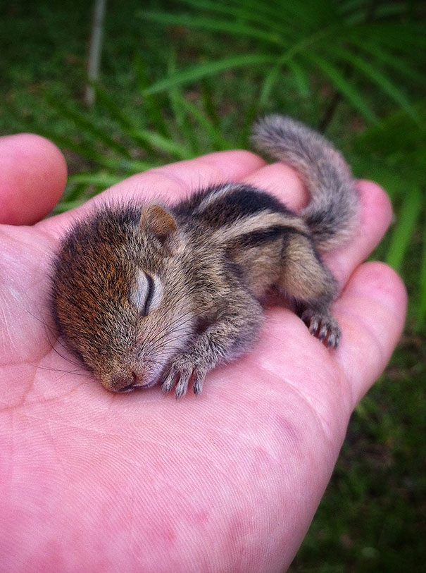 Abandoned Baby Squirrel Rescued By Filmmaker Becomes Best Friend Bored Panda