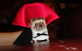 21 Creative and Funny Halloween Costumes For Pets