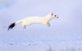 15 Award-Winning Photos From The Wildlife Photographer of the Year 2013