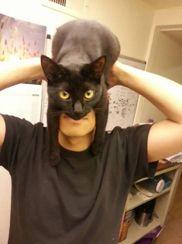 make cat toys