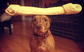 Meet Scout, The World's Most Patient Dog Who Can Balance Anything On His Head