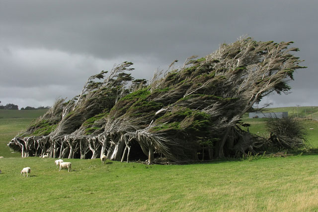 Extreme Antarctic Winds Shape Trees Into Beautiful Forms on Slope Point, New Zealand