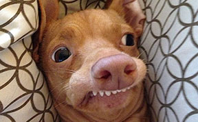 Tuna The Abandonded Puppy Becomes Adorable Internet Sensation