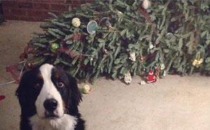 30 Hunde und Katzen, die Weihnachten ruinierten