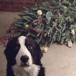 14+ Dogs And Cats That Destroyed Christmas