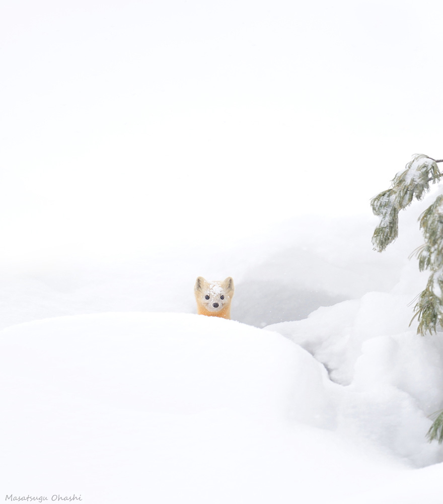 animals-in-winter-14