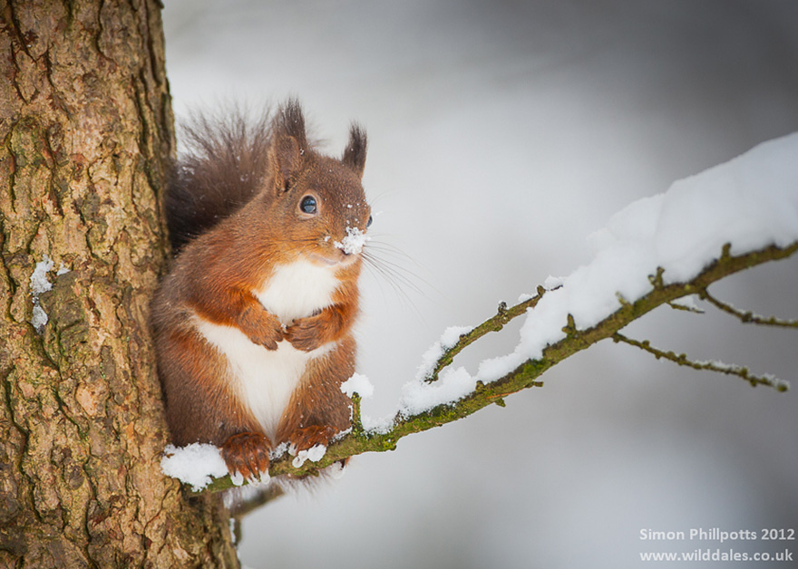 animals-in-winter-6