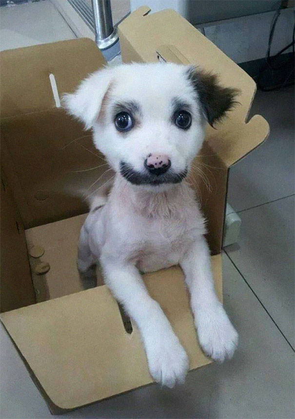 animals-with-mustache-1