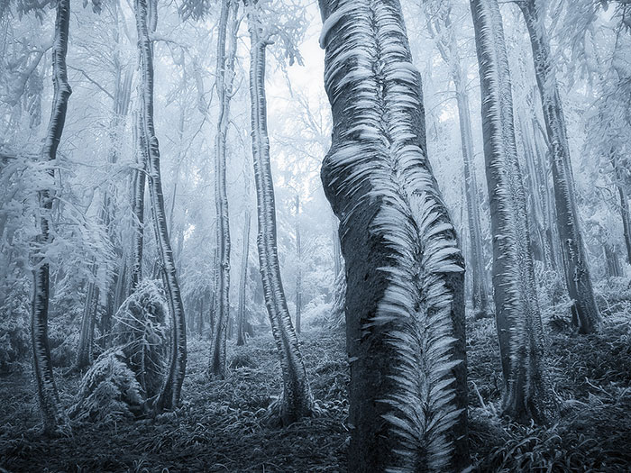 15+ Mysterious Forests You'd Love To Get Lost In